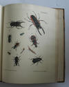 Catalogus Systematicus Coleopterorum - Catalogue Systematique de